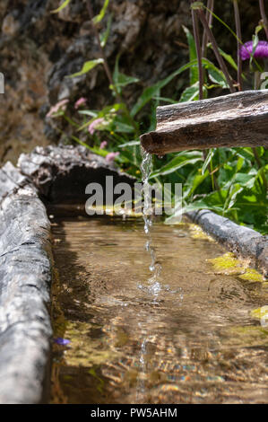 An old tree trunk is used as a through and is being filled by a flow pipe made from a second trunk. Image from the Italian Dolomites on a summer morni - Stock Photo