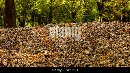 Ground covering of dry autumn leaves. - Stock Photo