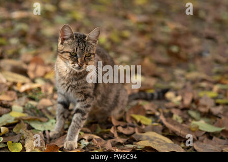 Lovely cat with striped fur - Stock Photo