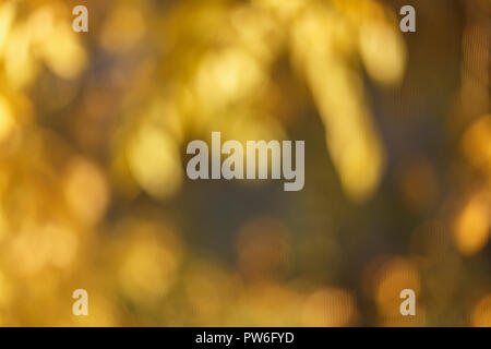 Blurred sunny abstract autumn nature background, yellow and brown color - Stock Photo