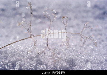 Formations of ice on a small branch in the snow, frost - Stock Photo
