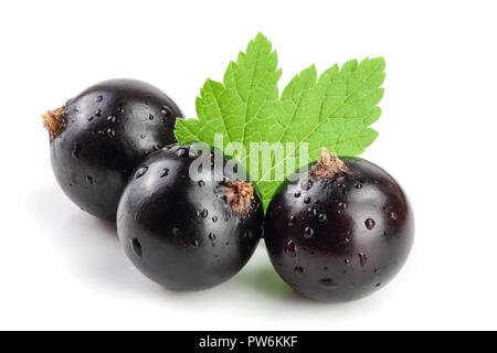 black currant with leaf isolated on white background - Stock Photo