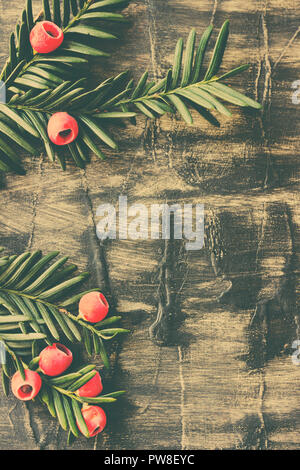 Christmas decoration. Evergreen tree branches with red berries on rusti wooden background - Stock Photo