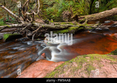 Blood red river in a green gorge. Devil's Pulpit, Finnich Glen, near Killearn, Scotland, United Kingdom - Stock Photo