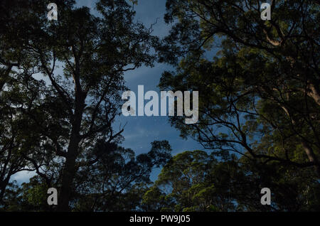 Stars between moonlight trees in Mapleton National Park - Stock Photo