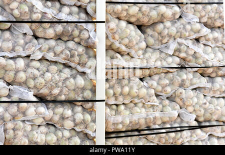 whole white mesh sacks of Spanish onions in a packing crate for british export, selective focus blurred background to ad copy space - Stock Photo