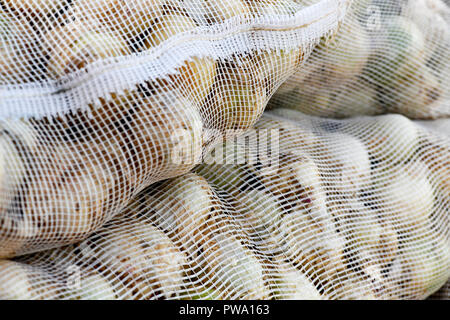 packed Spanish onions in mesh sacks for british export, selective focus blurred background to ad copy space - Stock Photo
