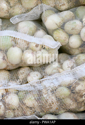 vertical of Spanish onions in white mesh sacks for british export, selective focus blurred background to ad copy space - Stock Photo