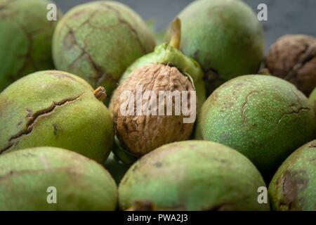Fresh harvest of walnuts (Juglans regia) in a green shell. Shell and peel of walnuts, when are walnuts ready to pick concept - Stock Photo