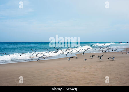 Flock of terns enjoying fine weather next to the waves on a sandy beach - Stock Photo