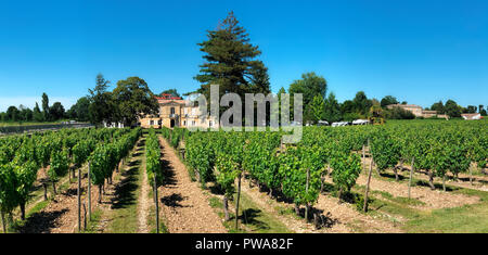 Vineyards at Chateau Marquis de Vaban near the town of Blaye in Nouvelle-Aquitaine region of southwest France. - Stock Photo