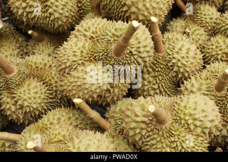 durian fruit of several tree species belonging to the genus Durio - Stock Photo