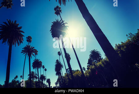 Sun shining over tall palm trees in Los Angeles, California - Stock Photo