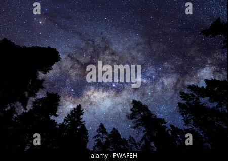 Milky way above treetops - Stock Photo