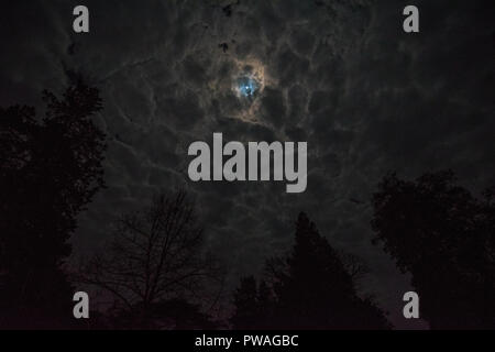 Midnight sky in old forest on a moonlight cloudy night - Stock Photo