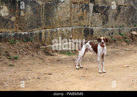 A dog is relaxing around the sellers in Hampi. Taken in India - August 2018. - Stock Photo