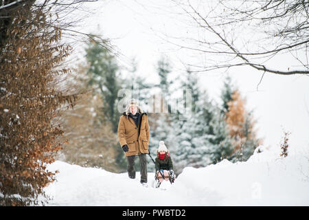Senior grandfather and a small girl sledging. A grandfather pulling a small girl on a sleigh on a winter day. - Stock Photo