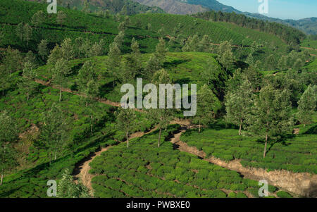 Tea plantations in the hills of Munnar, Kerala India Stock ...