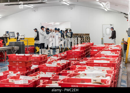 Newlyn fish market auction Cornwall - Stock Photo