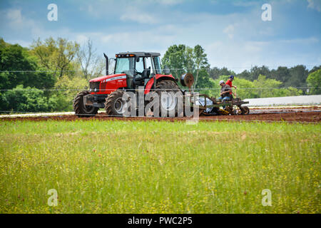 Two farmers plow and sow seed behind red tractor in green field near Apalachicola, FL, Florida Panhandle, USA - Stock Photo
