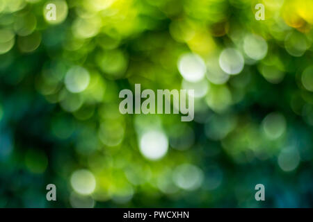 Green bokeh background in a garden, in a sunny day. green bokeh pattern, abstract texture - Stock Photo