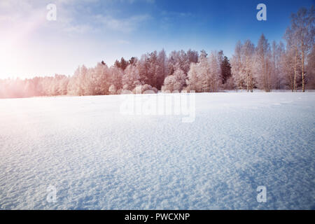 Beautiful trees in winter landscape in early morning - Stock Photo