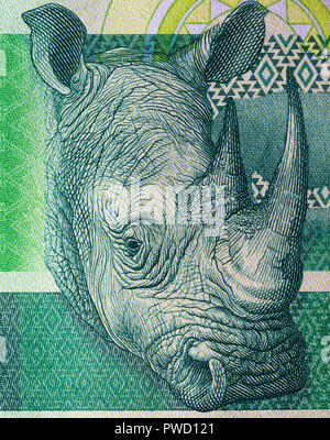 Rhinoceros from 10 rand banknote, Republic of South Africa, 2015 - Stock Photo