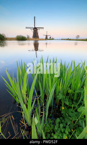 Windmills reflected in canal framed by grass and pink sky at sunset Kinderdijk Molenwaard South Holland The Netherlands Europe - Stock Photo