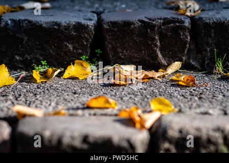 Old stairs with colorful autumn leaves. - Stock Photo