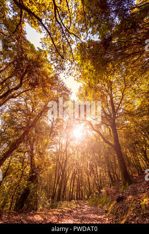 Beautiful sunset on a path inside an oak forest in autumn, with the sun's rays filtering through the branches. - Stock Photo