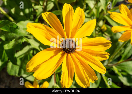 Berlin, Germany, October 10, 2018: Close-Up of Yellow Flower - Stock Photo