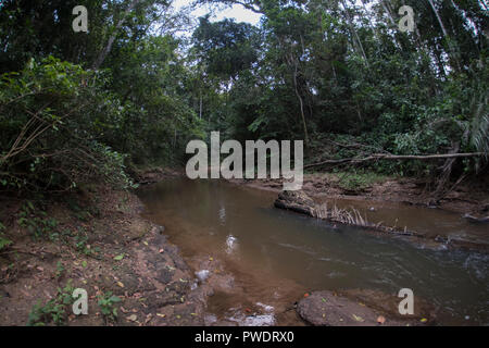 A small river flowing through the jungle in Madre de Dios, Peru. - Stock Photo