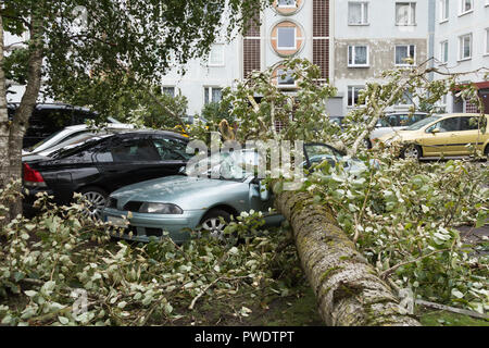 a strong september wind broke a tree that fell on a car parked nearby, disaster backgroiund - Stock Photo