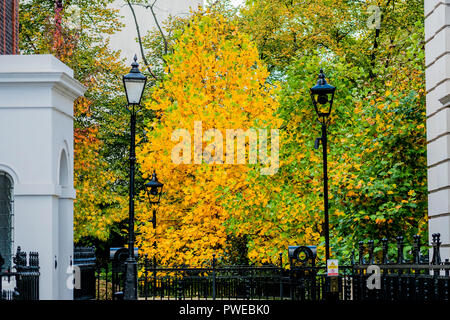 St James Park, London. 16th Oct 2018. UK Weather; A tree turns golden behind the Departmnent of justice. Credit: Guy Bell/Alamy Live News - Stock Photo