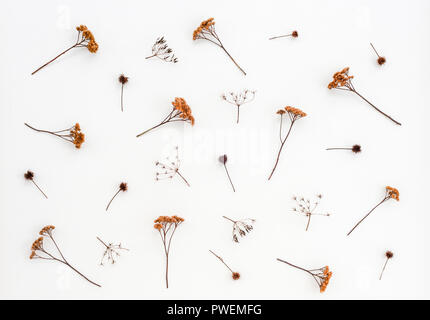 Dry thistles and umbrella plants on white canvas background. Autumn herbs. - Stock Photo