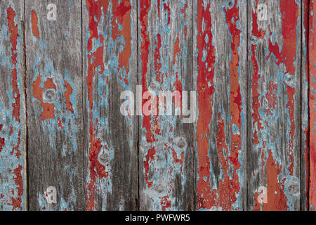 Old wood door built of vertical gray weathered planks, has paint worn off through three layers - red, blue and orange, grain visible. Good background. - Stock Photo