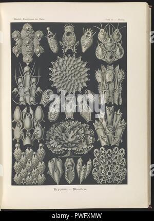 Bryozoa. - Woostiere - Stock Photo