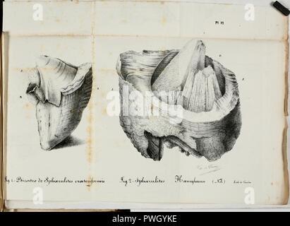 Bulletin d'histoire naturelle de la Société Linnéenne de Bordeaux - Stock Photo