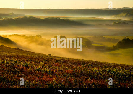 Cuckmere valley, East Sussex, United Kingdom, UK, covered in mist in the lower part of the valley with golden lit rolling hills above with the sun shi - Stock Photo