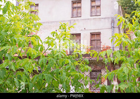 Abandoned house behind the mesh fence and big green plants - Stock Photo