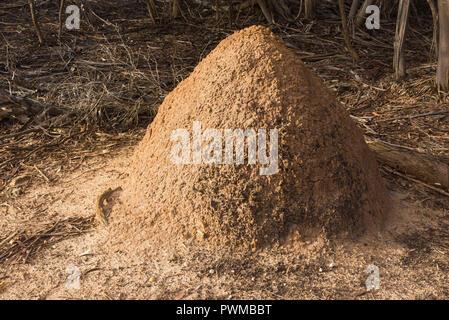 Large termite mound in wilderness on Kangaroo Island in South Australia, Australia. - Stock Photo
