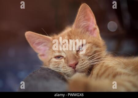 Adorable ginger kitten lying down on a pillow - selective focus with bokeh background. - Stock Photo