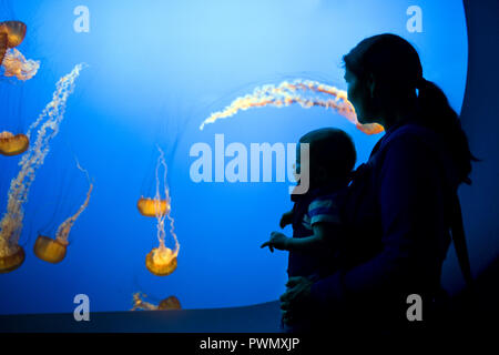 Mother and baby son watching jellyfish float in an aquarium. - Stock Photo