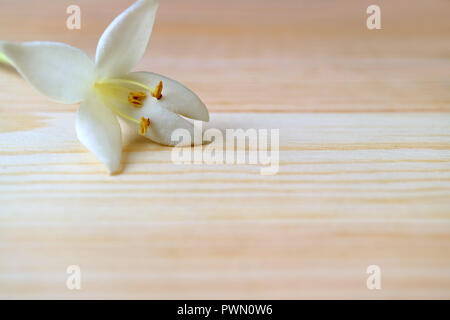 Closed up a beautiful white blooming Millingtonia flower on the light brown wooden table, with free space for text and design - Stock Photo
