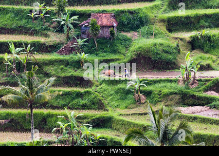Rural landscape and fields in Bali, Indonesia - Stock Photo