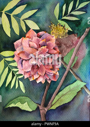 Luxurious red-pink garden Dahlia flower painted in watercolor style - Stock Photo