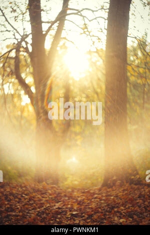 autumn forest with sun light beams blurred image - Stock Photo