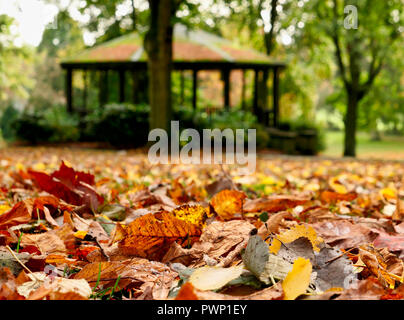 Ashbourne Park, Derbyshire, UK. 17th Oct, 2018. UK Weather: Autumn leaves fall in Ashbourne Park, Derbyshire the gateway to the Peak District National park Credit: Doug Blane/Alamy Live News - Stock Photo