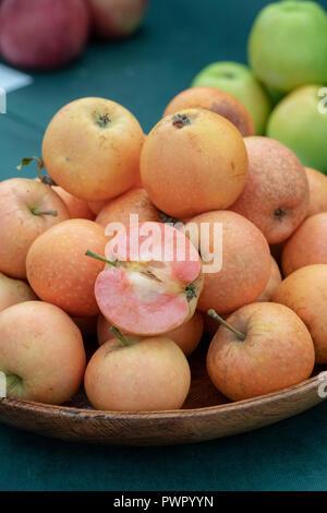 Pink Sunburst apple / Malling Sunburst. New sweet-tasting apple variety on display at at RHS Malvern Autumn show. Worcestershire, England. 2018 - Stock Photo