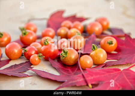 Fresh red ripe autumn cherry tomatoes laying on red mapel leaves on a background of an old cement table - Stock Photo
